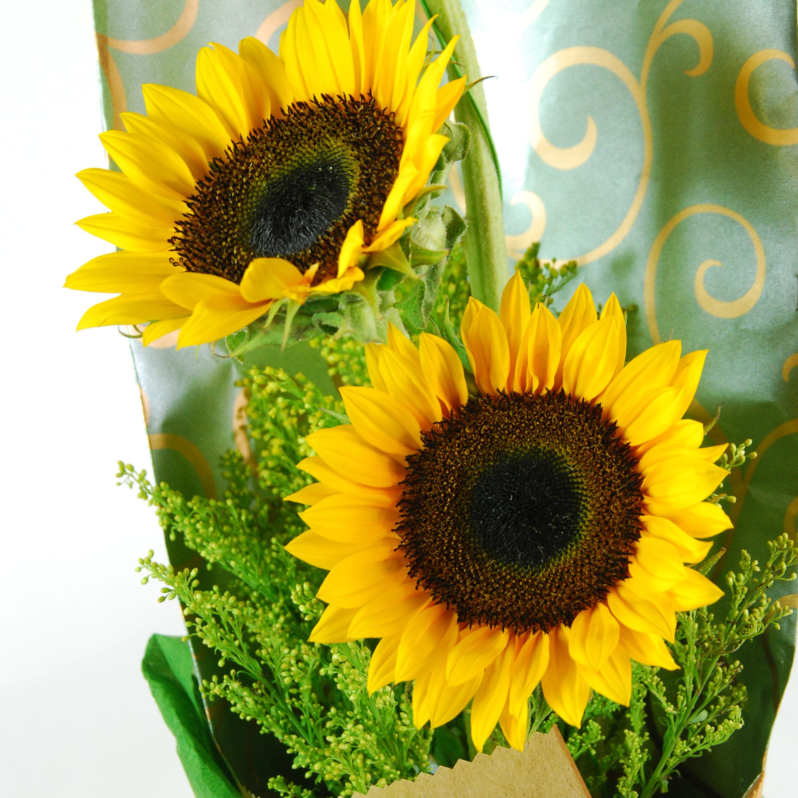 【巧繪網-FS010036祝福】=3支向日葵+新鮮葉材=畢業花束/網路花店/向日葵花束