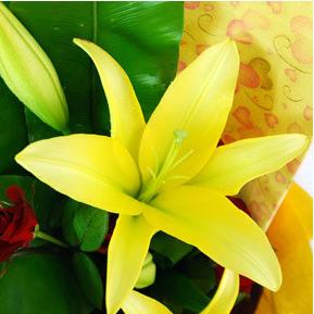 【巧繪網—浪漫花束花禮】FL530131 線上花店‧溫馨友誼百合花束+新鮮花材/生日禮物