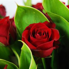 【巧繪網—浪漫花束花禮】FR050130 網路花店‧純愛波浪=33朵紅玫瑰花束+當季花材