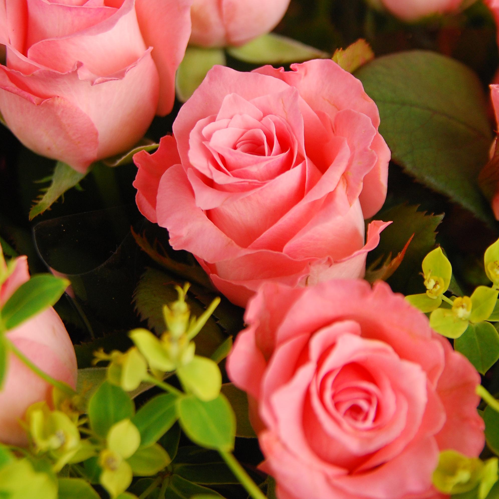 【巧繪網—傳情花禮】FR530143粉紅女孩‧線上花店新鮮粉玫花束‧七夕情人節熱賣首選