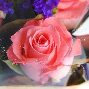 【巧繪網—浪漫花束花禮】FZ040129 線上花店‧紫色花園‧粉瑰花束+當季花材/生日禮物