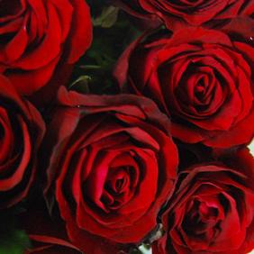 【巧繪網—情人節禮物】FR020020網路花店‧花禮=10朵紅玫瑰搭配當季新鮮葉材