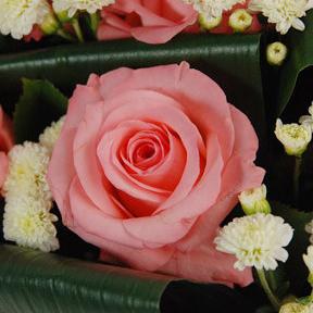 【巧繪網—傳情花束花禮】FR020112妳的甜蜜‧儼選粉玫瑰花束‧生日情人禮