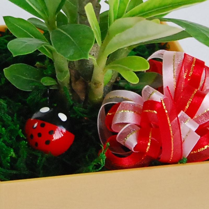 【巧繪網—創意綠生活】PT020022=景緻小盆栽‧耐擺耐放綠色植物‧辦公室小物推薦